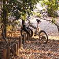 烏と自転車