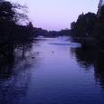 セーヌ河の朝(嘘)
