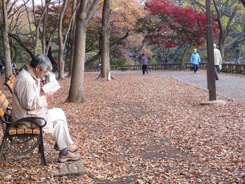 本を読む老人と枯葉の落ちる風景
