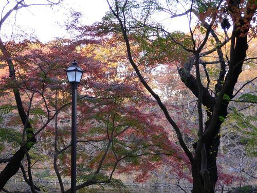 日本的紅葉