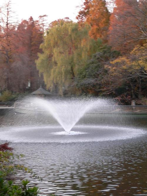 これが噴水。