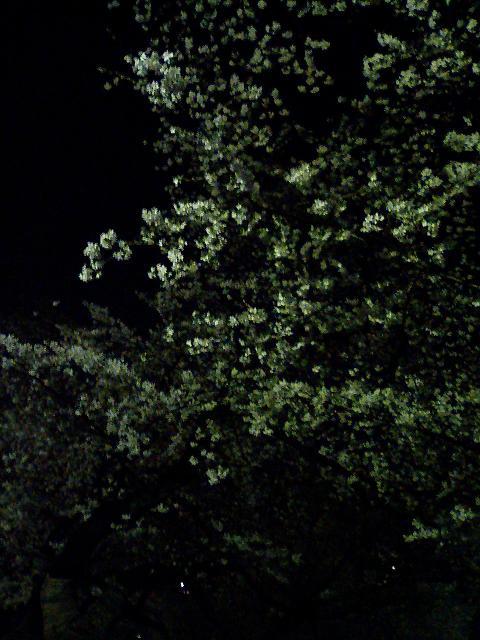 暗闇に映える白