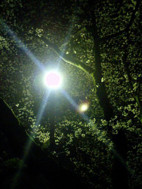 幻想の森へようこそ。